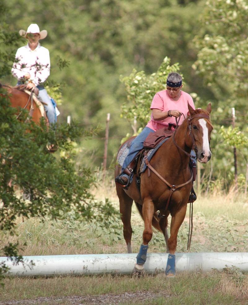 Trail Horse Association