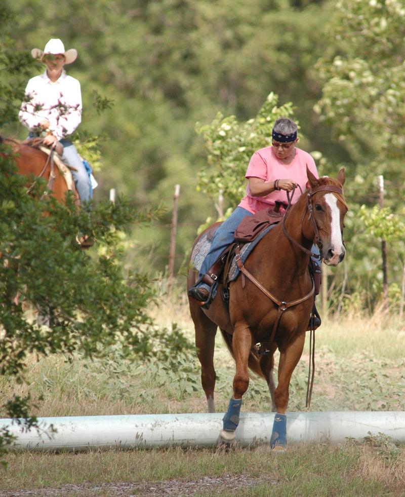 Trail Horse Association